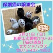 猫の道草&NPO法人WITHDOG合同保護猫の譲渡会