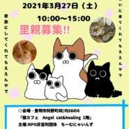 猫の譲渡会 IN 豊明 ~ ちーむ にゃいんず 2021年3月27日開催