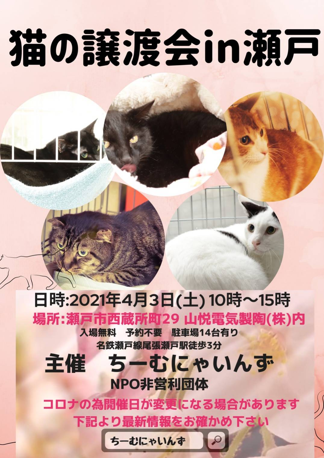 猫の譲渡会 IN 瀬戸 ~ ちーむ にゃいんず 2021年4月3日開催