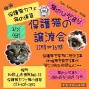 猫の道草&猫のひだまり合同 保護猫の譲渡会