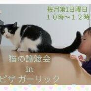 猫の譲渡会inピザガーリック