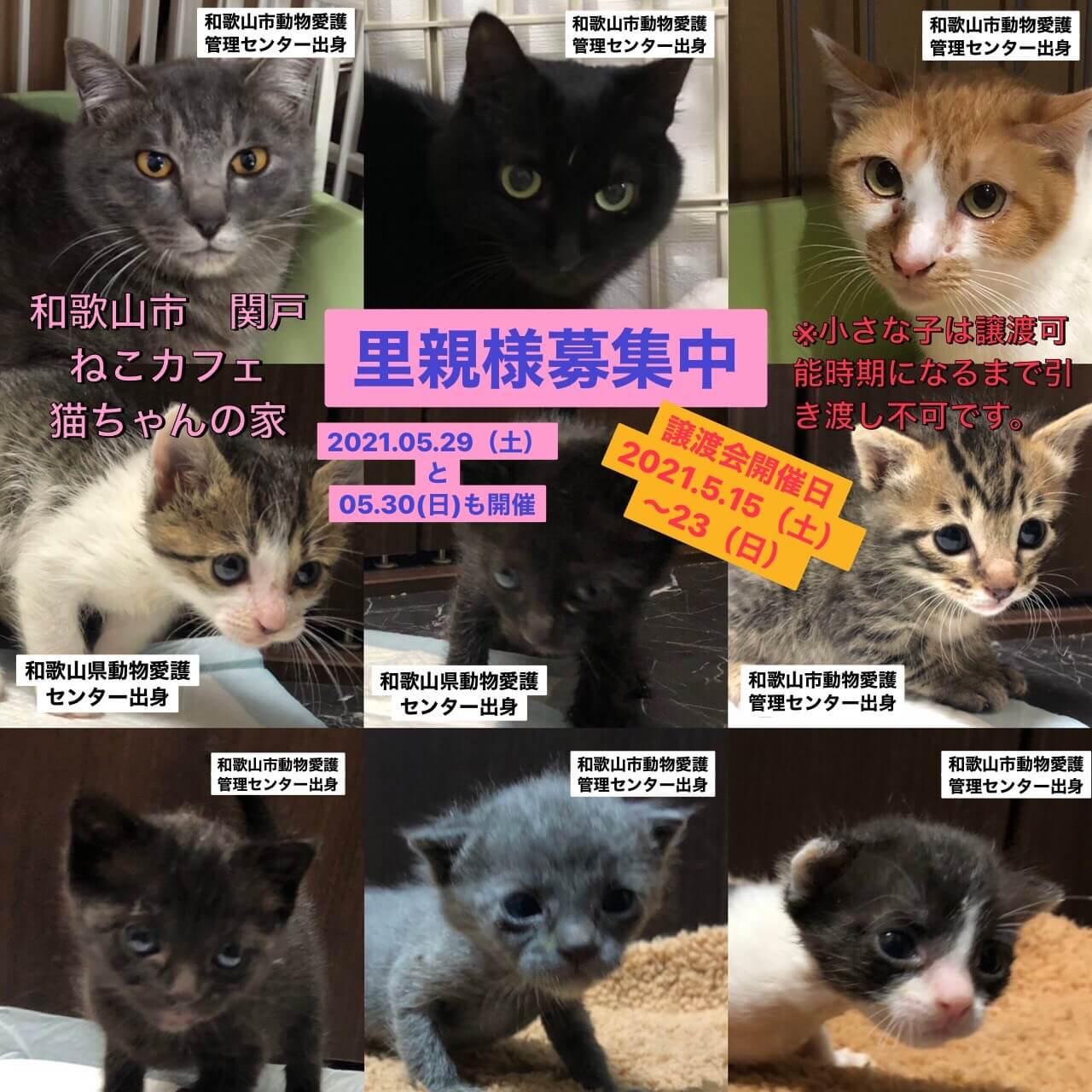 愛護センター出身の猫ちゃん達に会いに来て下さい!