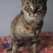 ♡コムギ♡猫とまったぁ~~~~りしたい!人にお勧め