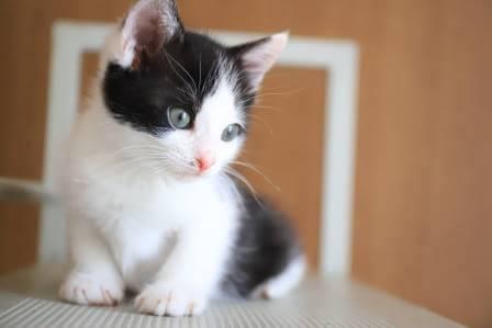 ふうま♡「モノクロ子猫Ⅲ」リーダーはボクだよ