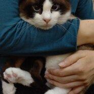 【保護猫】パンくん推定1歳♂️MIX
