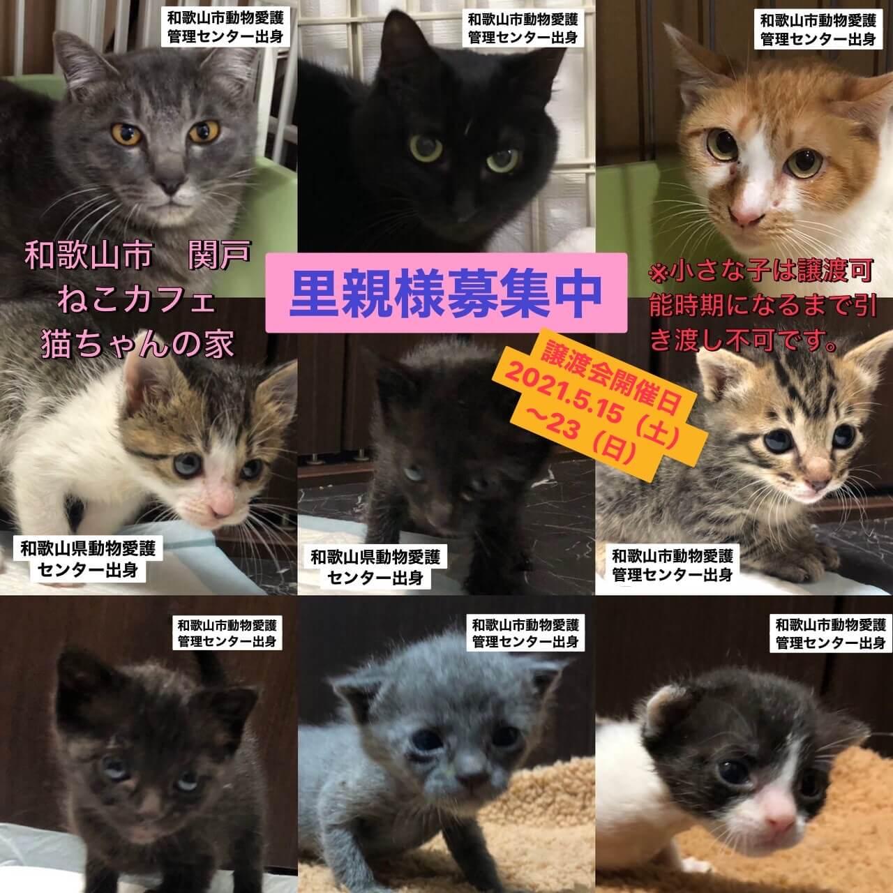 愛護センター出身の猫ちゃん達に会いに来てください!