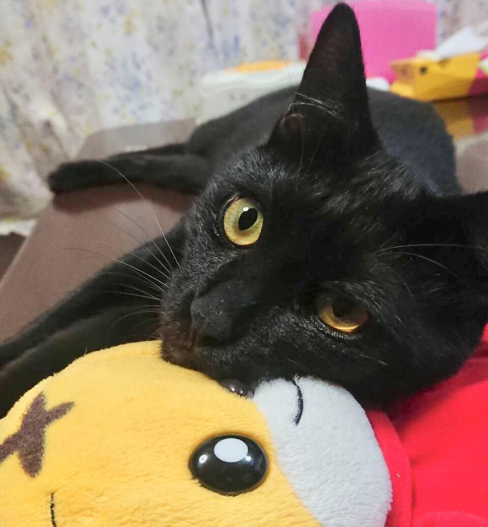 甘えん坊の黒猫マンくん