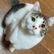 可愛い保護猫「カイル」