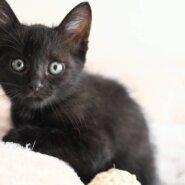 こあ♡あまえんぼうの黒猫女子