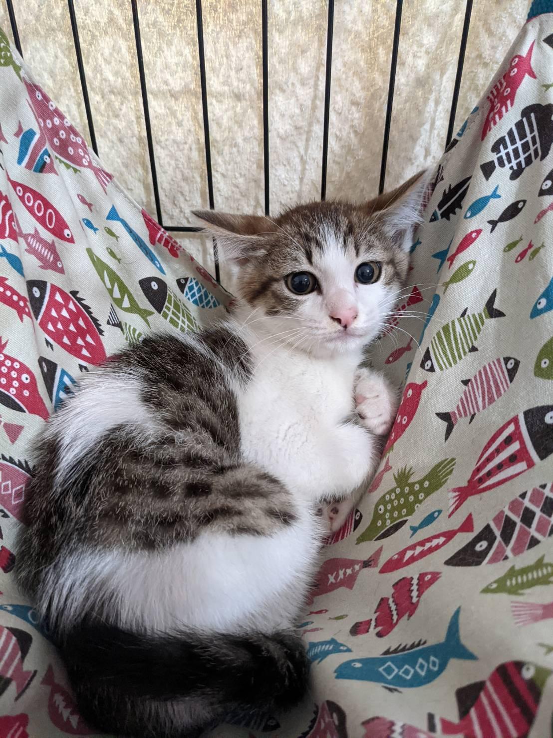 サニー♡はっきり言って美猫です!!