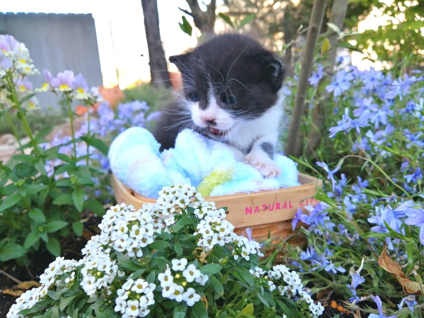 ちび猫づくし!in豊明 ★猫の譲渡会~ちーむ にゃいんず 2021年6月26日(土)開催