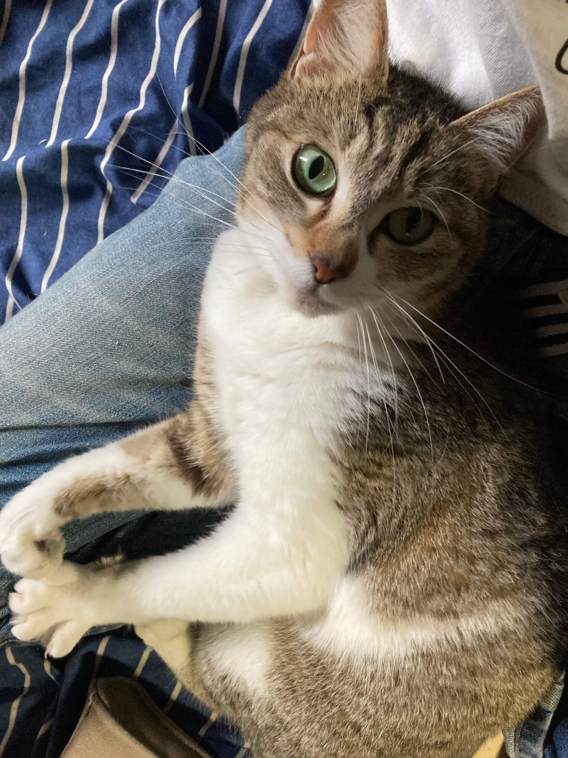 4歳くらいのメス猫