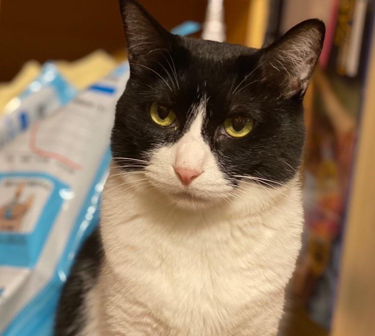 可愛い保護猫 「まりも」