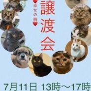 7.11 犬猫の譲渡会開催致します