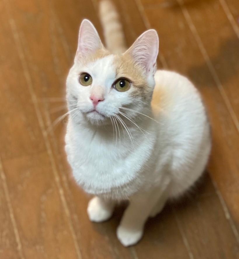 可愛い保護猫「ブラン」