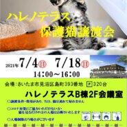 7/18(日)ハレノテラス保護猫譲渡会