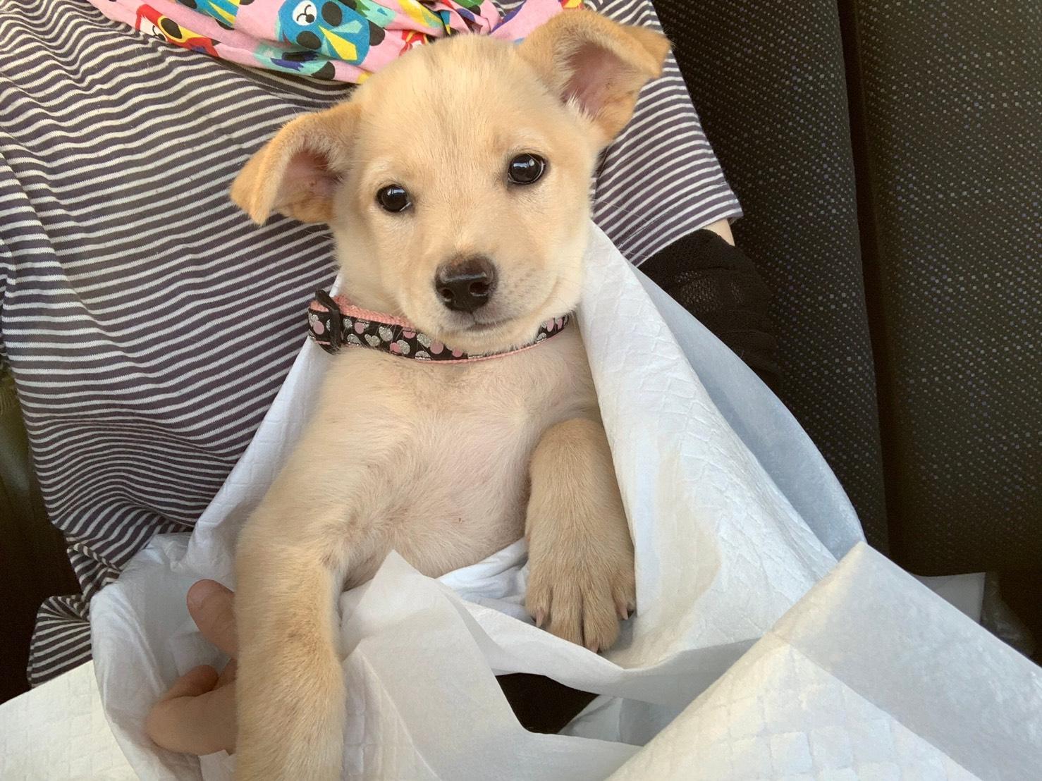 可愛い保護犬「なーちゃん」