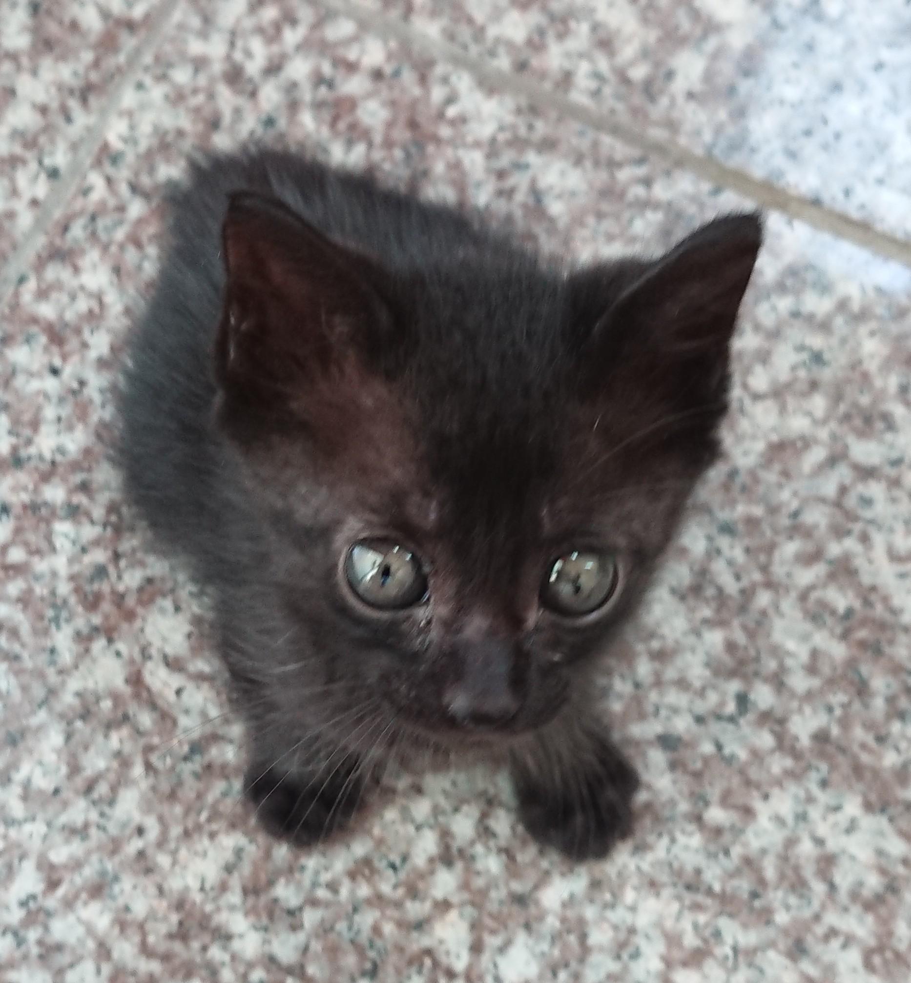 生後3ヶ月前後の子猫(男の子)