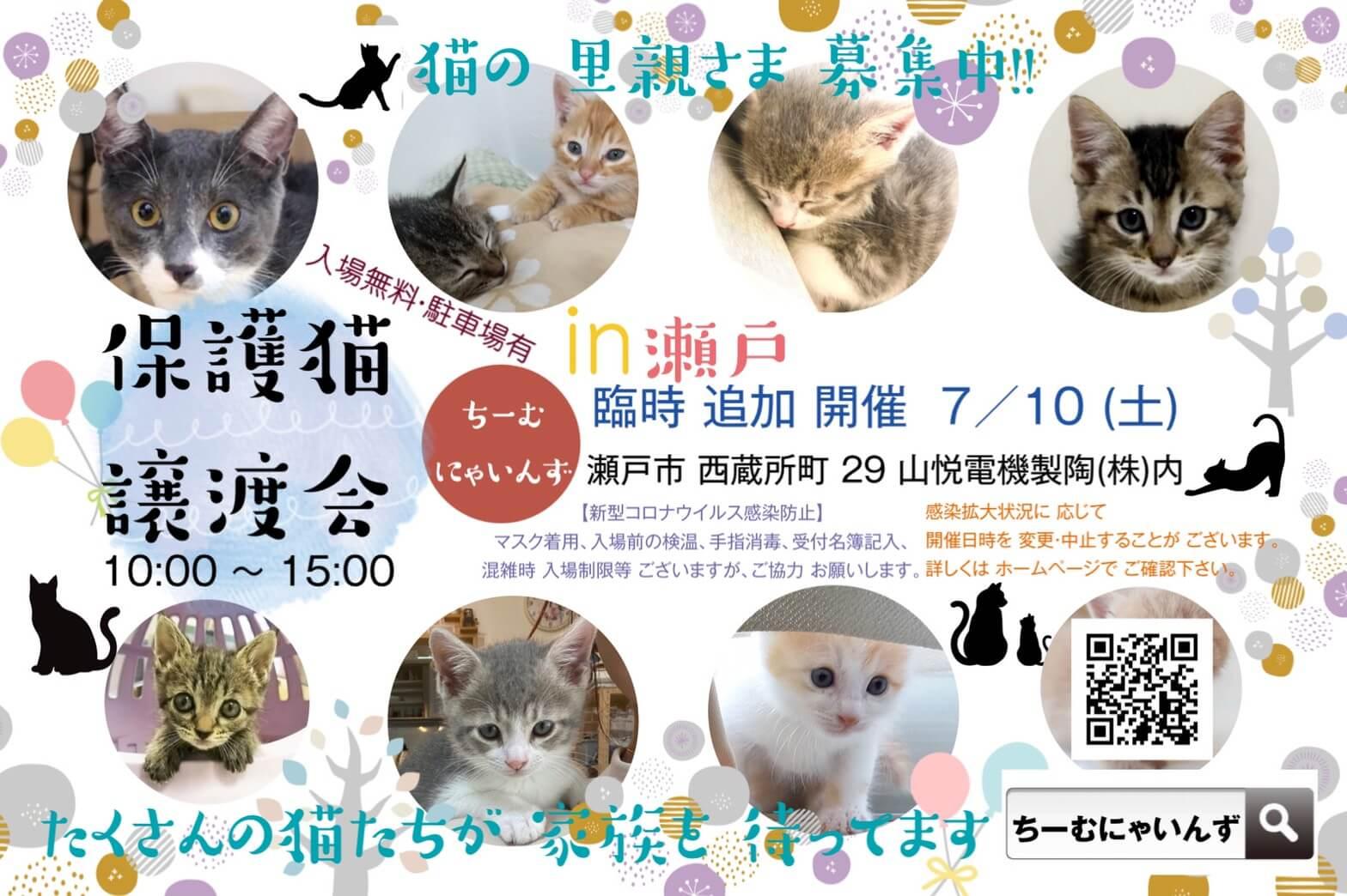 子猫だらけ!in瀬戸 ★猫の臨時譲渡会~ちーむ にゃいんず 2021年7月10日(土)開催