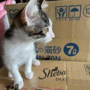 生後2ヶ月半 子猫 男の子