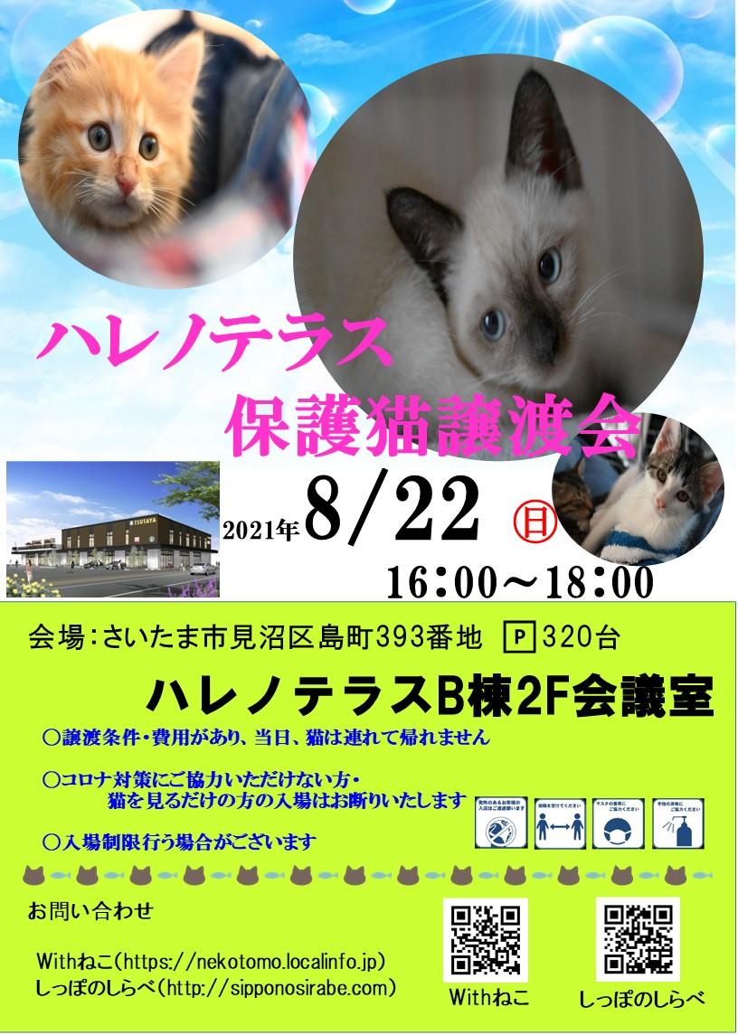 8/22 さいたま市 ハレノテラス保護猫譲渡会
