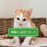 感謝。とっても良いご縁をいただきました。山に捨てられてた猫一家保護