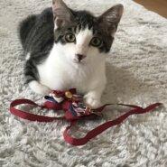 【保護猫】マーチ推定3ヶ月♂️キジ白