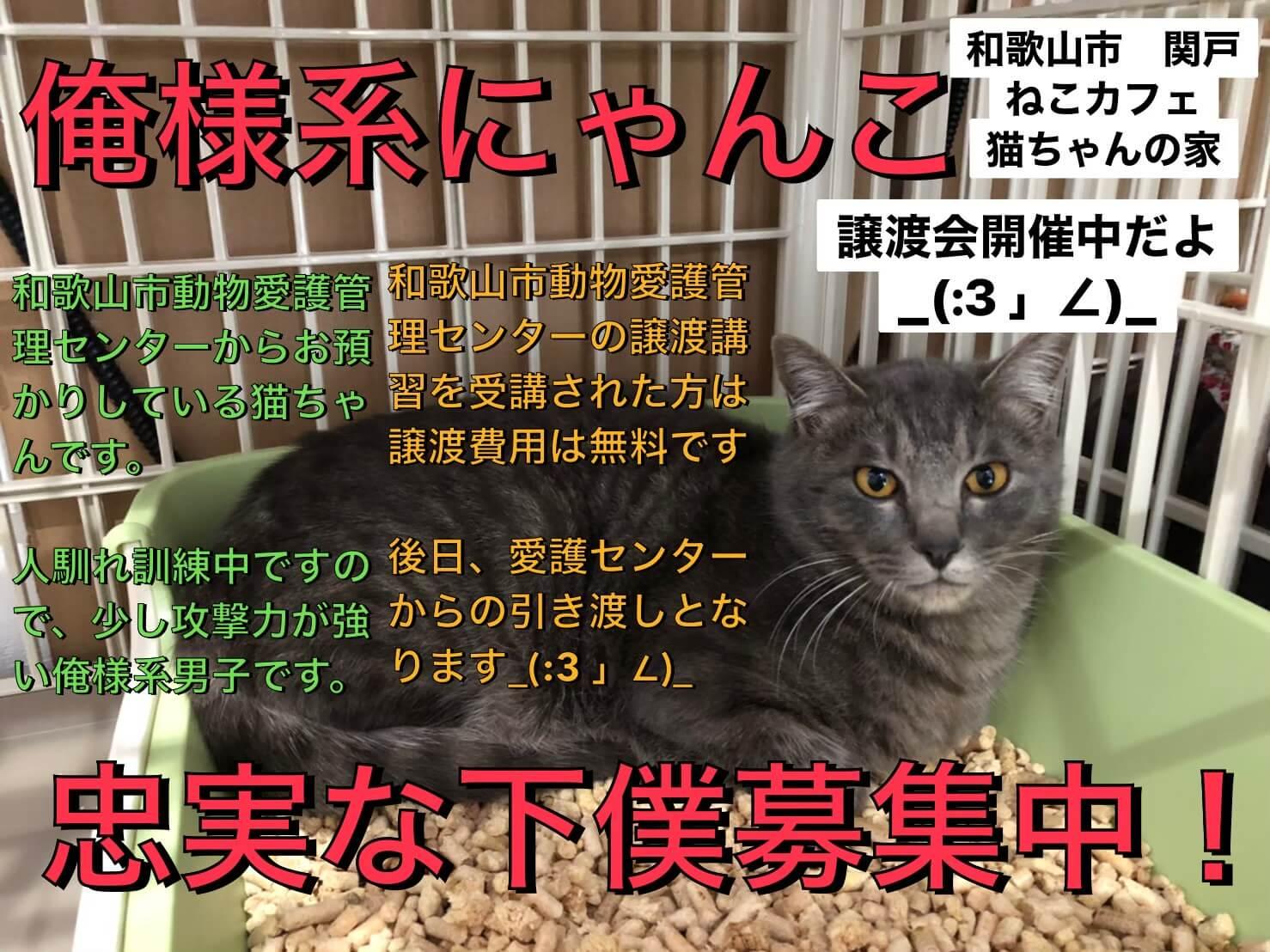 和歌山市動物愛護管理センター出身の猫ちゃんの譲渡会です!