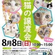 子猫まつり緊急開催/みよし市