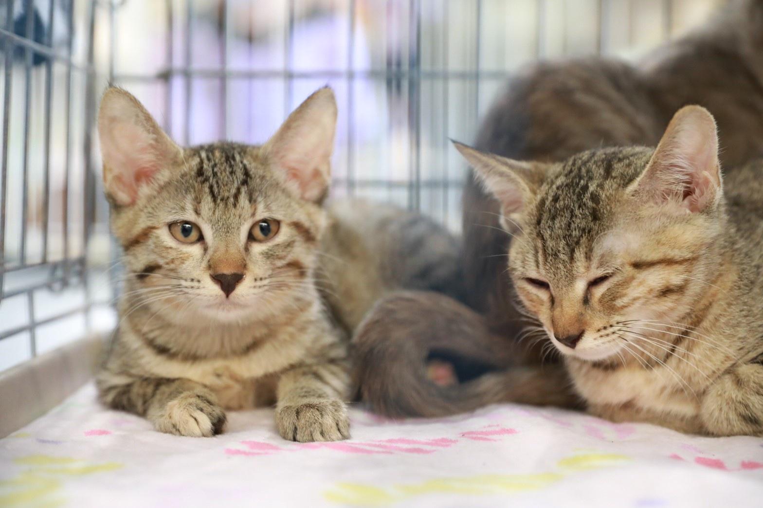 可愛い4匹の姉妹猫ちゃん(3)