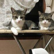 (恐らく)兄弟猫⭐︎