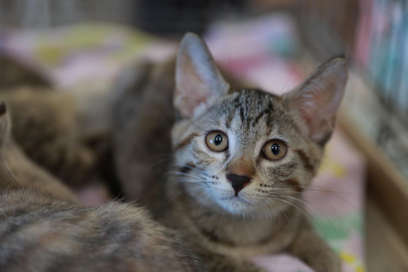 可愛い4匹の姉妹猫ちゃん(1)