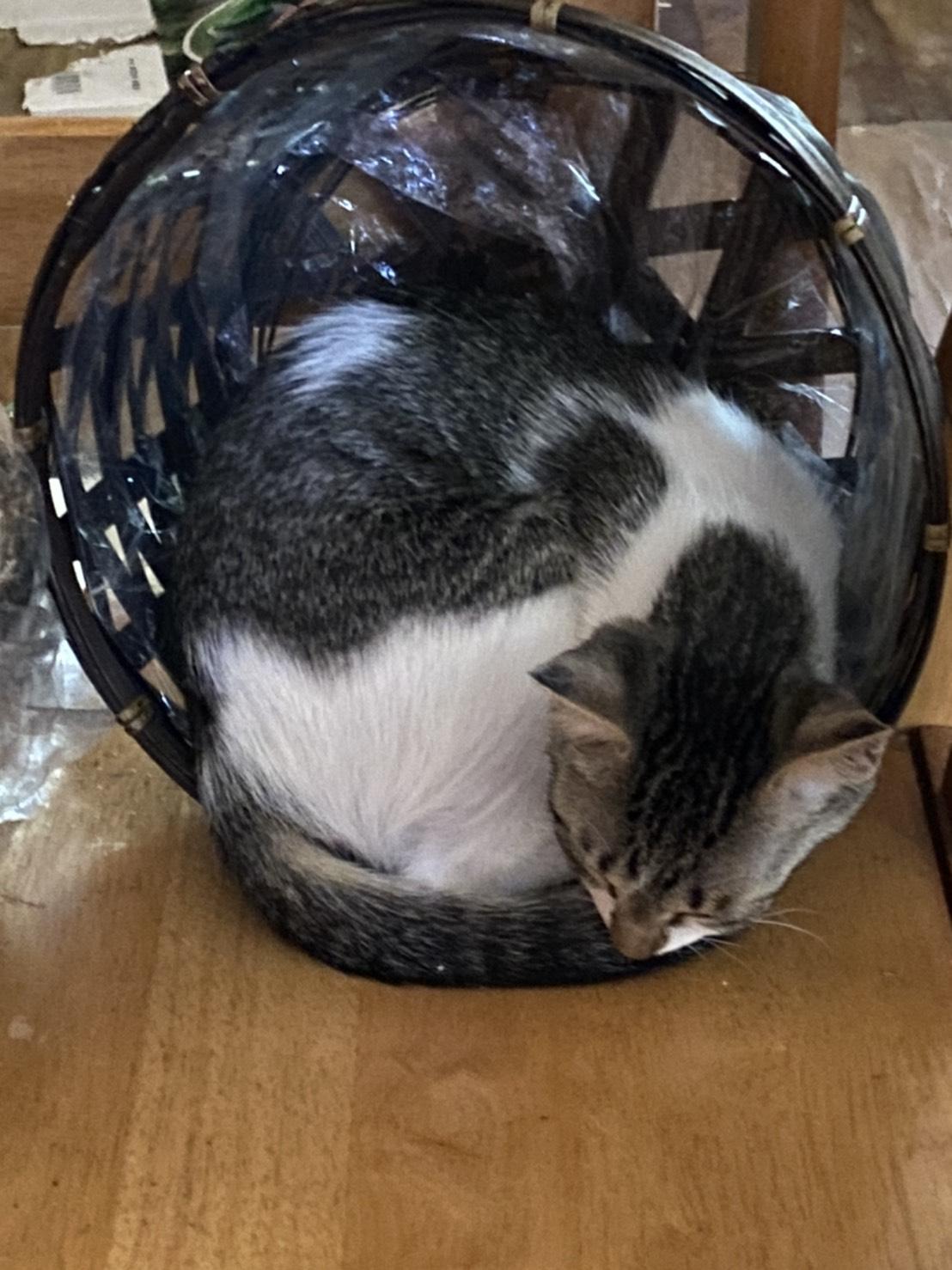 生後3ヶ月程の子猫
