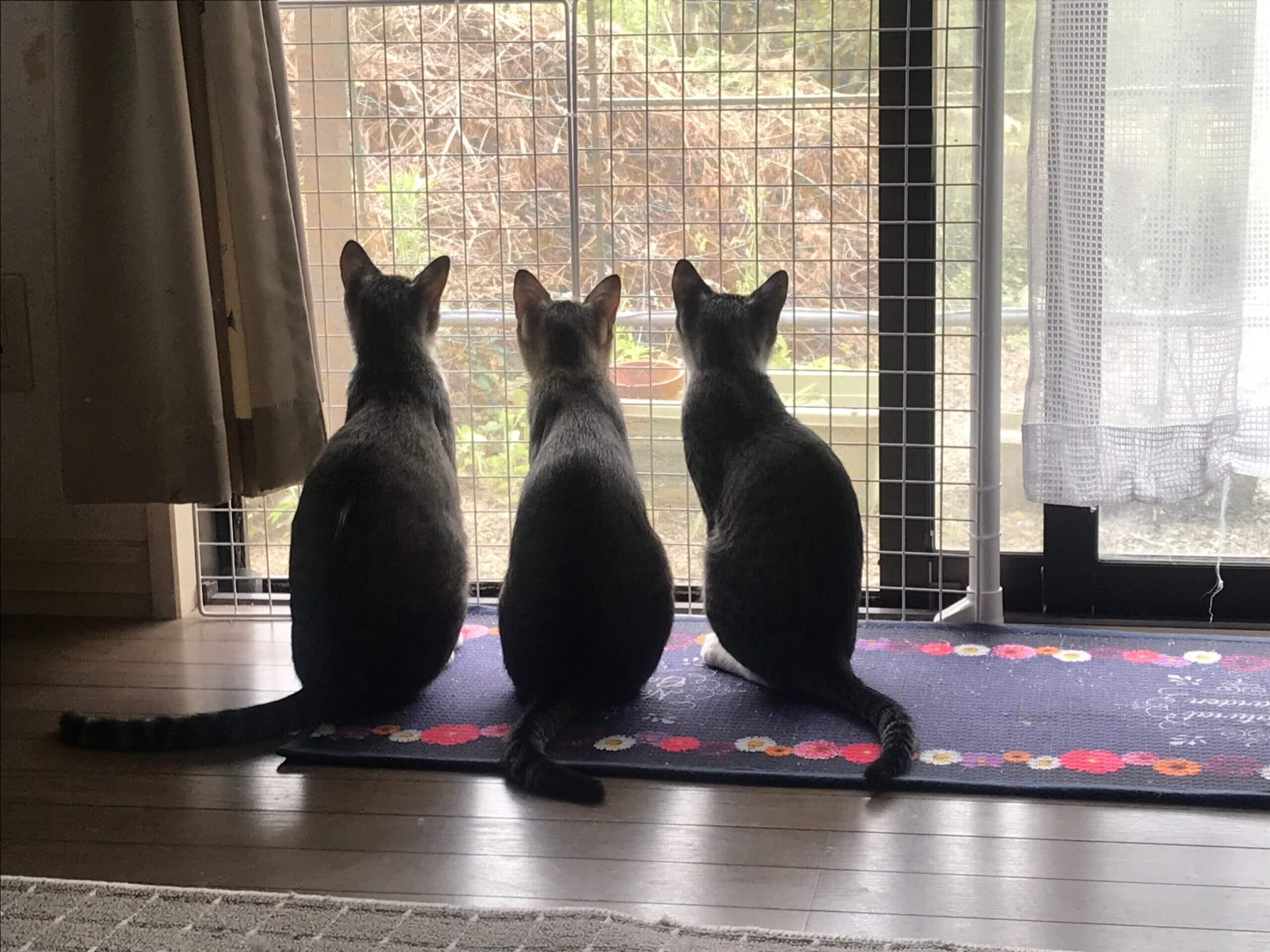 ⭐︎元気な仲良し3人組⭐︎