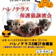 10/16(土)ハレノテラス保護猫譲渡会