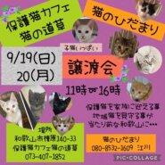 猫の道草&猫のひだまり 2日間開催 保護猫の譲渡会