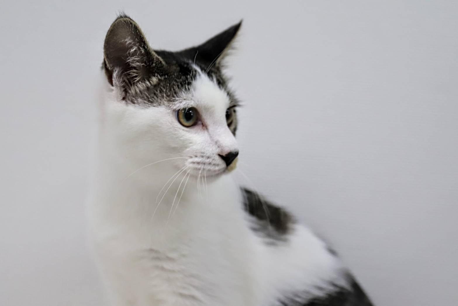 ショウ♡甘えん坊で人も猫も大好き
