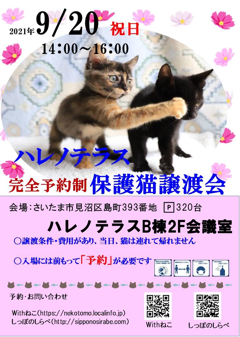 9/20(祝)ハレノテラス保護猫譲渡会