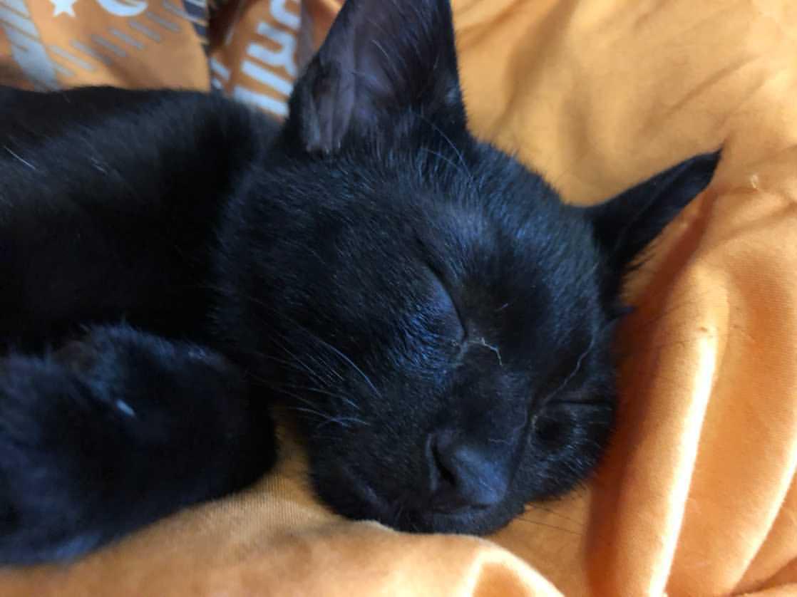 毛並みが自慢の黒猫くん