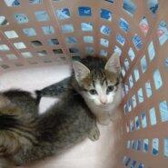 かわいい子猫1ヶ月