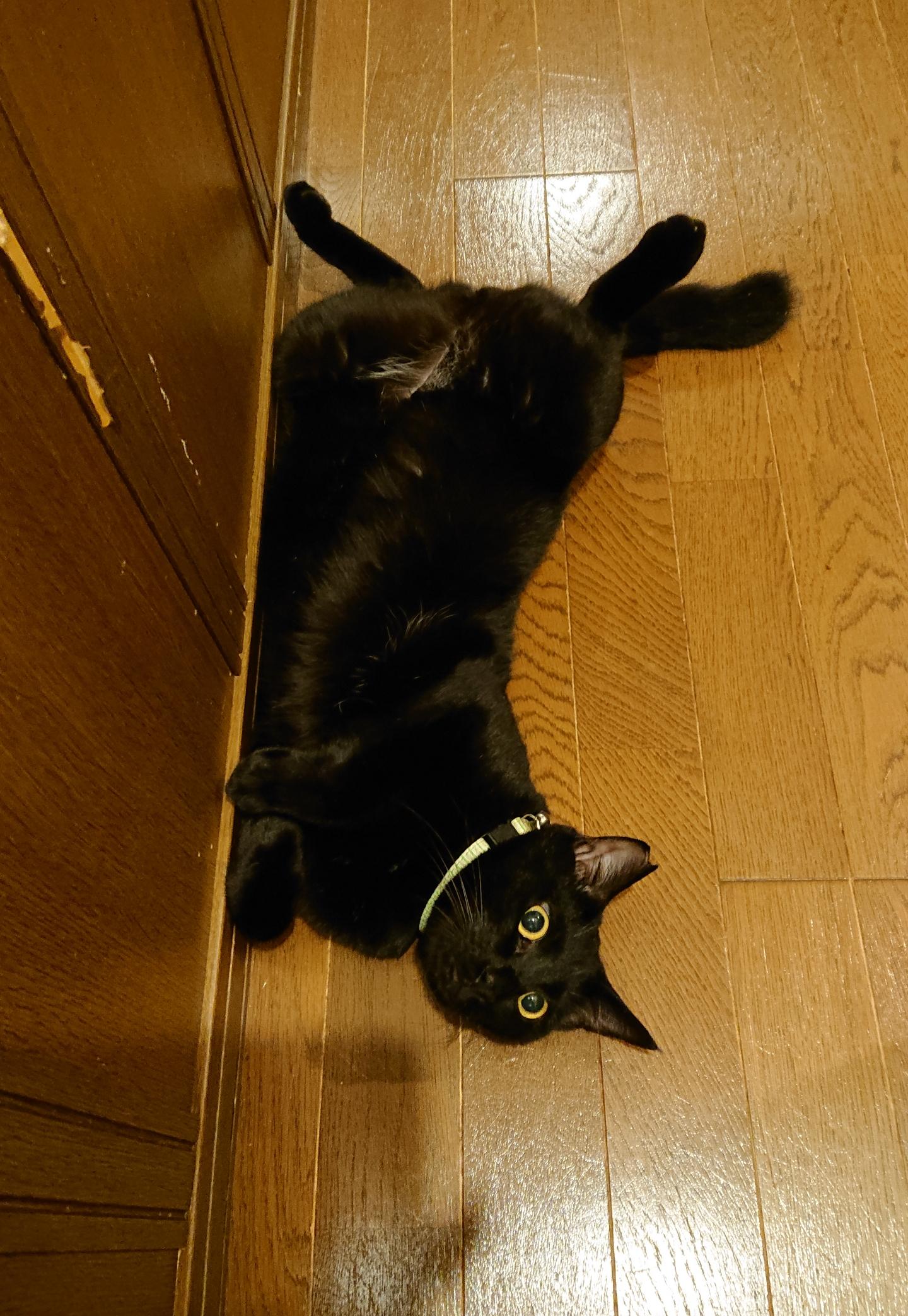おちゃめな黒猫男の子アポロくん