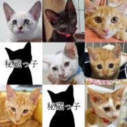 ★15匹の子猫♪愛知県みよし市