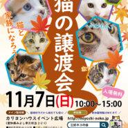 秋の子猫まつり/愛知県みよし市