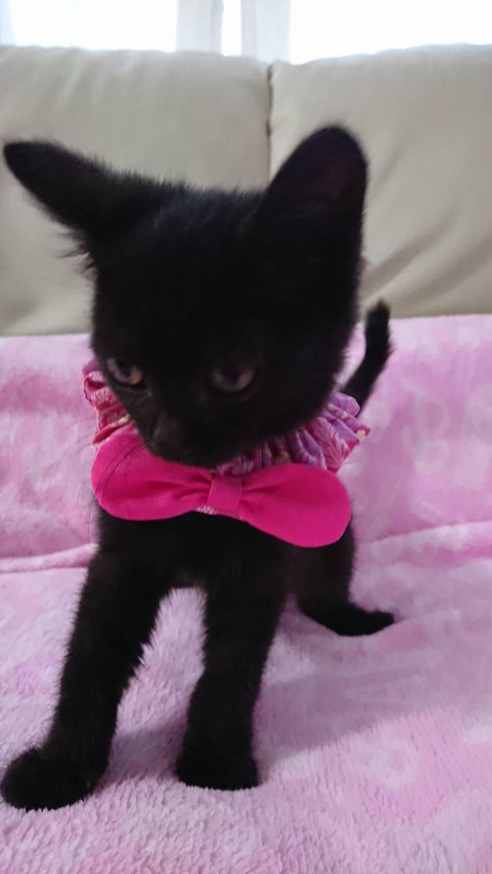 人が大好きな黒仔猫のスノちゃん!