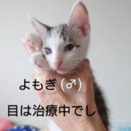やんちゃな仔猫