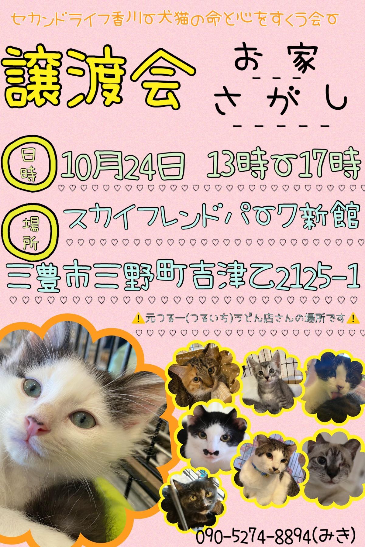 10.24犬猫の譲渡会
