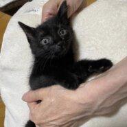 生後1ヶ月〜2ヶ月未満のカワイイ子猫の募集です♪