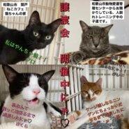 大人猫ちゃんの譲渡会です(^^)