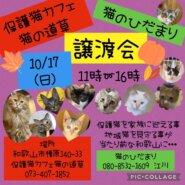 和歌山市 毎月第3日曜 保護猫の譲渡会