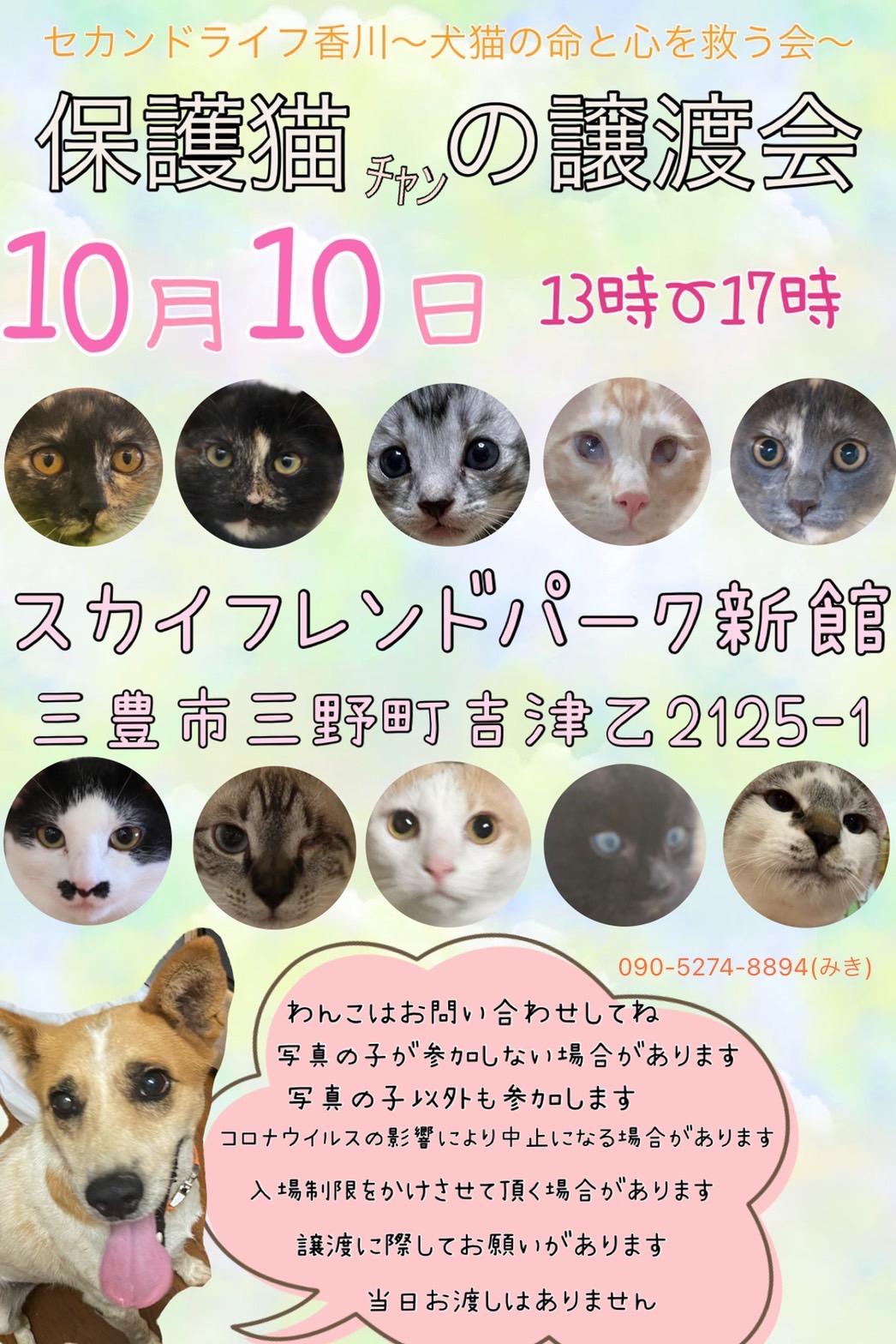 10.10犬猫譲渡会!